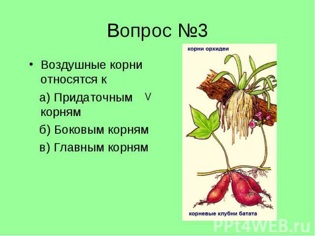 Воздушные корни относятся к Воздушные корни относятся к а) Придаточным корням б) Боковым корням в) Главным корням