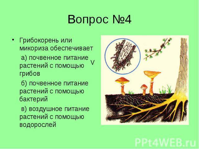 Грибокорень или микориза обеспечивает Грибокорень или микориза обеспечивает а) почвенное питание растений с помощью грибов б) почвенное питание растений с помощью бактерий в) воздушное питание растений с помощью водорослей