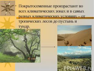 Покрытосеменные произрастают во всех климатических зонах и в самых разных климат