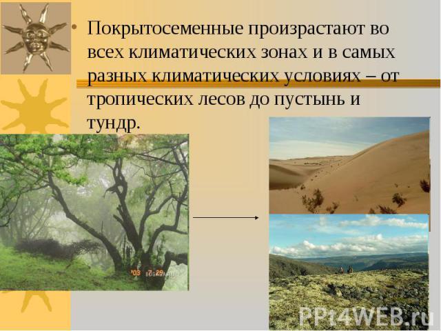 Покрытосеменные произрастают во всех климатических зонах и в самых разных климатических условиях – от тропических лесов до пустынь и тундр. Покрытосеменные произрастают во всех климатических зонах и в самых разных климатических условиях – от тропиче…