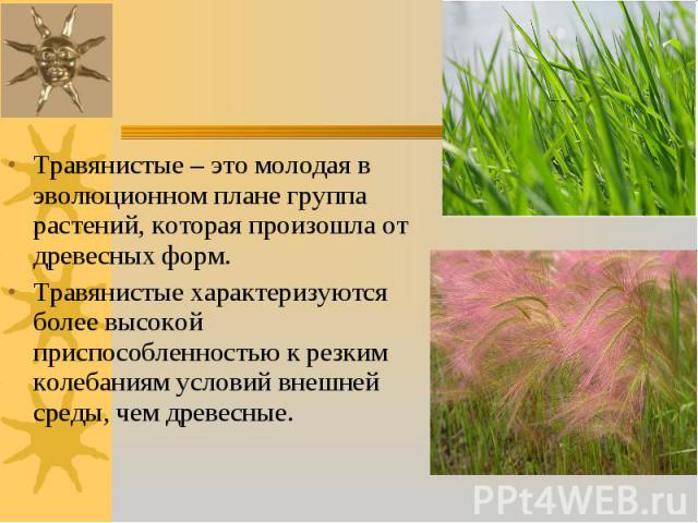 Травянистые – это молодая в эволюционном плане группа растений, которая произошла от древесных форм. Травянистые – это молодая в эволюционном плане группа растений, которая произошла от древесных форм. Травянистые характеризуются более высокой присп…