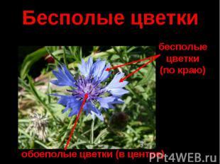Бесполые цветки