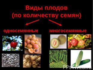 Виды плодов (по количеству семян)