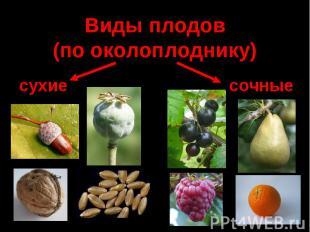 Виды плодов (по околоплоднику)