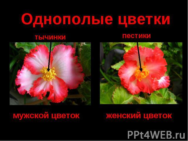 Однополые цветки