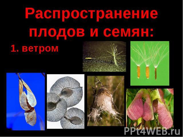 Распространение плодов и семян:
