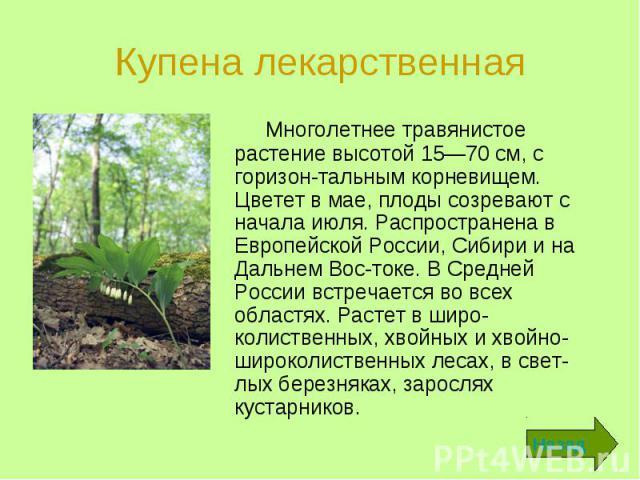 Многолетнее травянистое растение высотой 15—70 см, с горизонтальным корневищем. Цветет в мае, плоды созревают с начала июля. Распространена в Европейской России, Сибири и на Дальнем Востоке. В Средней России встречается во всех областях. Р…