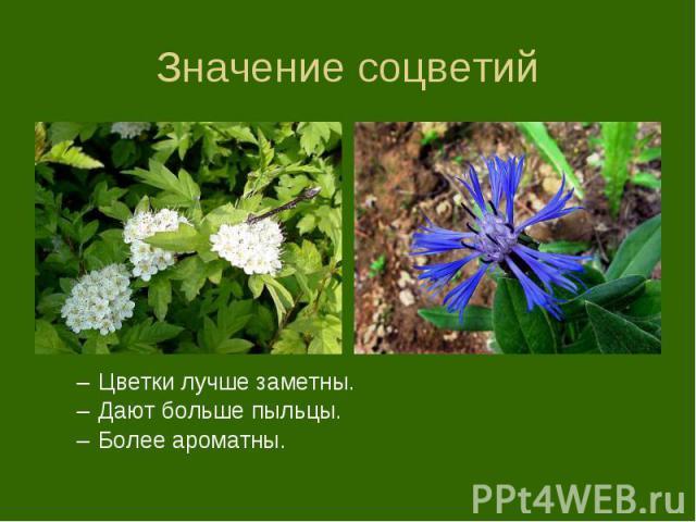 Цветки лучше заметны. Цветки лучше заметны. Дают больше пыльцы. Более ароматны.