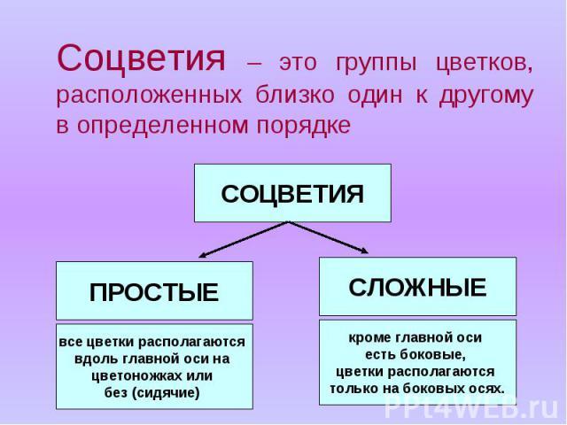 Соцветия – это группы цветков, расположенных близко один к другому в определенном порядке Соцветия – это группы цветков, расположенных близко один к другому в определенном порядке