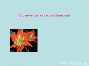 «Строение цветка и его особенности».