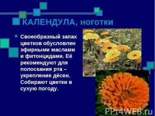 Своеобразный запах цветков обусловлен эфирными маслами и фитонцидами. Её рекомен