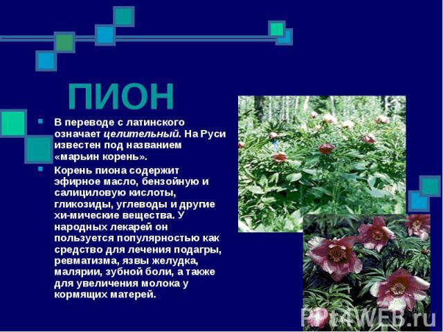 В переводе с латинского означает целительный. На Руси известен под названием «марьин корень». В переводе с латинского означает целительный. На Руси известен под названием «марьин корень». Корень пиона содержит эфирное масло, бензойную и салициловую …