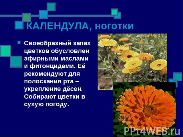 Своеобразный запах цветков обусловлен эфирными маслами и фитонцидами. Её рекомендуют для полоскания рта – укрепление дёсен. Собирают цветки в сухую погоду. Своеобразный запах цветков обусловлен эфирными маслами и фитонцидами. Её рекомендуют для поло…