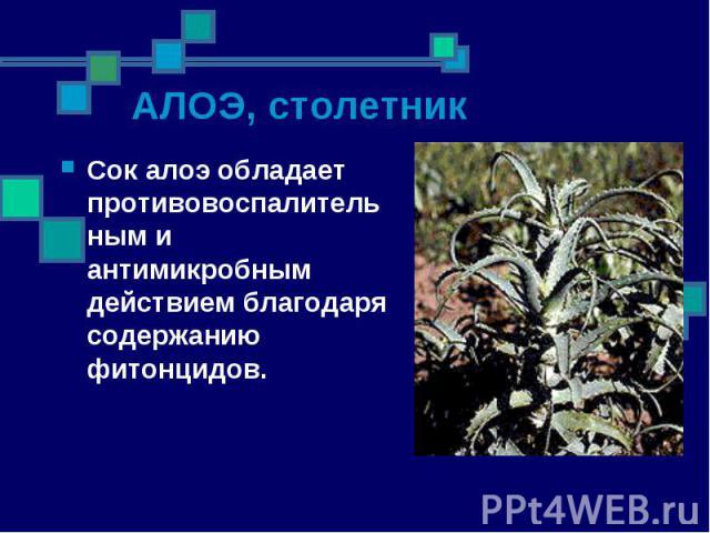 Сок алоэ обладает противовоспалительным и антимикробным действием благодаря содержанию фитонцидов. Сок алоэ обладает противовоспалительным и антимикробным действием благодаря содержанию фитонцидов.