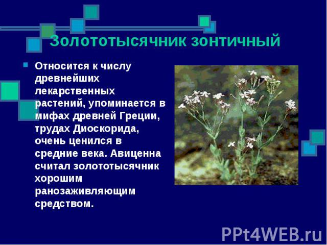 Относится к числу древнейших лекарственных растений, упоминается в мифах древней Греции, трудах Диоскорида, очень ценился в средние века. Авиценна считал золототысячник хорошим ранозаживляющим средством. Относится к числу древнейших лекарственных ра…