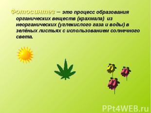 Фотосинтез – это процесс образования органических веществ (крахмала) из неоргани