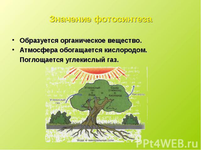 Образуется органическое вещество. Образуется органическое вещество. Атмосфера обогащается кислородом. Поглощается углекислый газ.