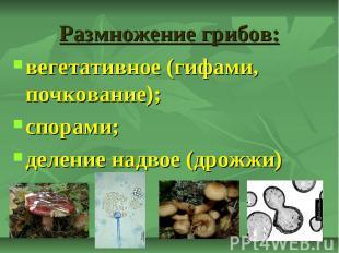 Размножение грибов: вегетативное (гифами, почкование); спорами; деление надвое (