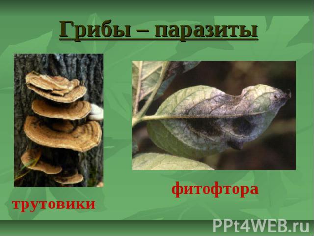 Грибы – паразиты