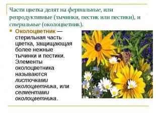 Околоцветник— стерильная часть цветка, защищающая более нежные тычинки и п