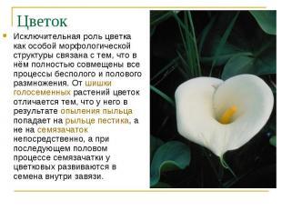 Исключительная роль цветка как особой морфологической структуры связана с тем, ч