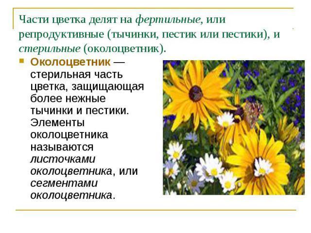Околоцветник— стерильная часть цветка, защищающая более нежные тычинки и пестики. Элементы околоцветника называются листочками околоцветника, или сегментами околоцветника. Околоцветник— стерильная часть цветка, защищающая более нежные ты…