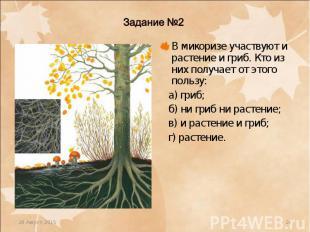 В микоризе участвуют и растение и гриб. Кто из них получает от этого пользу: В м