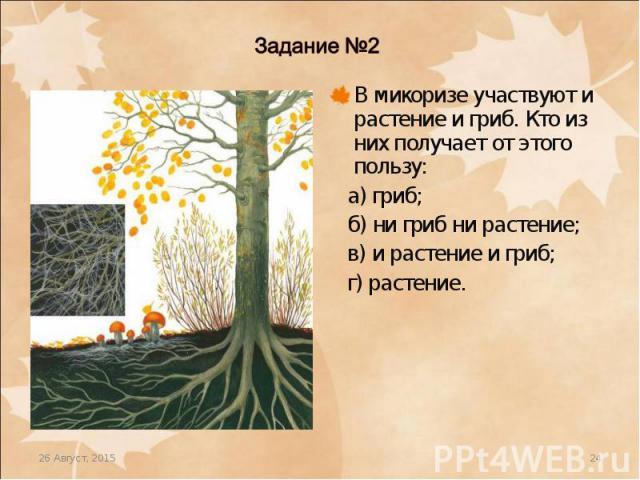 В микоризе участвуют и растение и гриб. Кто из них получает от этого пользу: В микоризе участвуют и растение и гриб. Кто из них получает от этого пользу: а) гриб; б) ни гриб ни растение; в) и растение и гриб; г) растение.
