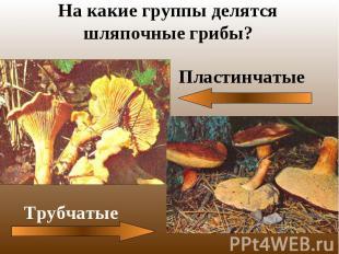 На какие группы делятся шляпочные грибы?