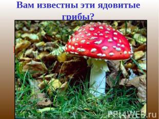 Вам известны эти ядовитые грибы?