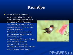 Замечательным лётчиком является колибри. Эта птица достигает длины всего 6 см, а