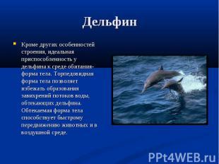 Кроме других особенностей строения, идеальная приспособленность у дельфина к сре