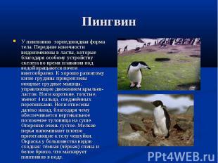 У пингвинов торпедовидная форма тела. Передние конечности видоизменены в ласты,
