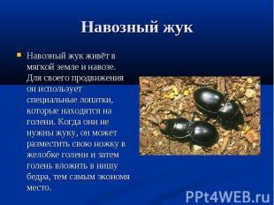 Навозный жук живёт в мягкой земле и навозе. Для своего продвижения он использует
