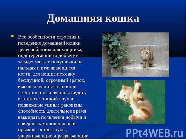 Все особенности строения и поведения домашней кошки целесообразны для хищника, подстерегающего добычу в засаде: мягкие подушечки на пальцах и втягивающиеся когти, делающие походку бесшумной, огромный зрачок, высокая чувствительность сетчатки, позвол…