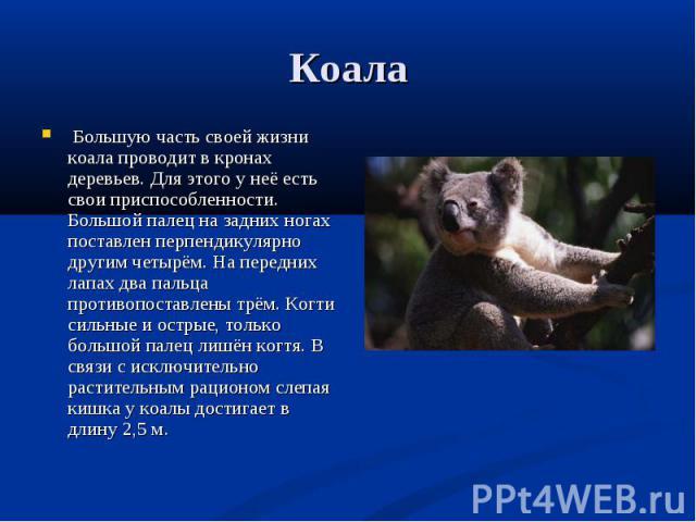 Большую часть своей жизни коала проводит в кронах деревьев. Для этого у неё есть свои приспособленности. Большой палец на задних ногах поставлен перпендикулярно другим четырём. На передних лапах два пальца противопоставлены трём. Когти сильные и ост…