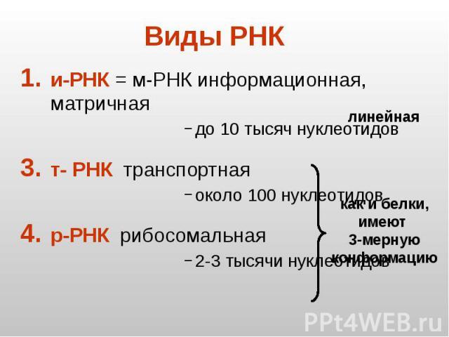 Виды РНК и-РНК = м-РНК информационная, матричная до 10 тысяч нуклеотидов т- РНК транспортная около 100 нуклеотидов р-РНК рибосомальная 2-3 тысячи нуклеотидов