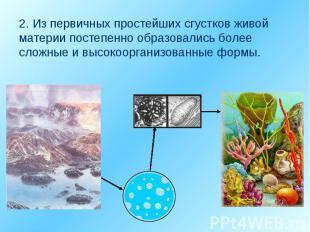 2. Из первичных простейших сгустков живой материи постепенно образовались более
