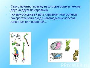 Стало понятно, почему некоторые органы похожи друг на друга по строению; Стало п