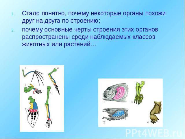 Стало понятно, почему некоторые органы похожи друг на друга по строению; Стало понятно, почему некоторые органы похожи друг на друга по строению; почему основные черты строения этих органов распространены среди наблюдаемых классов животных или растений…