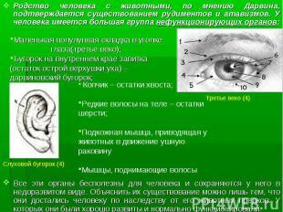 Родство человека с животными, по мнению Дарвина, подтверждается существованием р