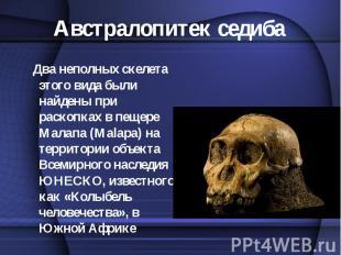 Два неполных скелета этого вида были найдены при раскопках в пещере Малапа (Mala