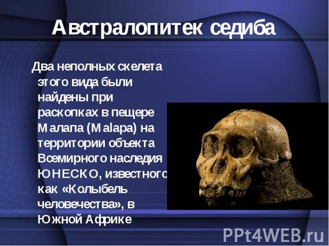 Два неполных скелета этого вида были найдены при раскопках в пещере Малапа (Malapa) на территории объекта Всемирного наследия ЮНЕСКО, известного как «Колыбель человечества», в Южной Африке