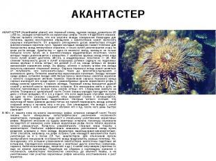 АКАНТАСТЕР (Acanthaster planci) или терновый венец, крупная звезда, диаметром 40
