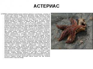 АСТЕРИАС (Asterias forbesi) изучена наиболее детально и всесторонне, и поэтому н
