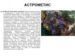 АСТРОМЕТИС (Astrometis sertulifera) предпочитающая селиться в защищенных от ярко
