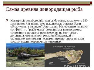 Materpiscis attenboroughi, или рыба-мама, жила около 380 миллионов лет назад, и