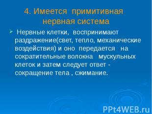 4. Имеется примитивная нервная система Нервные клетки, воспринимают раздражение(