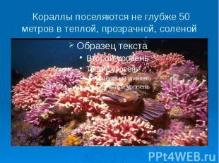 Кораллы поселяются не глубже 50 метров в теплой, прозрачной, соленой воде, образ