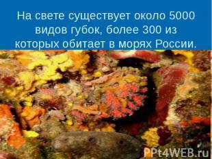 На свете существует около 5000 видов губок, более 300 из которых обитает в морях